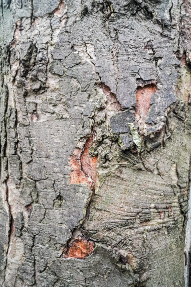 Woodbark 2 1500px DSC00168.png